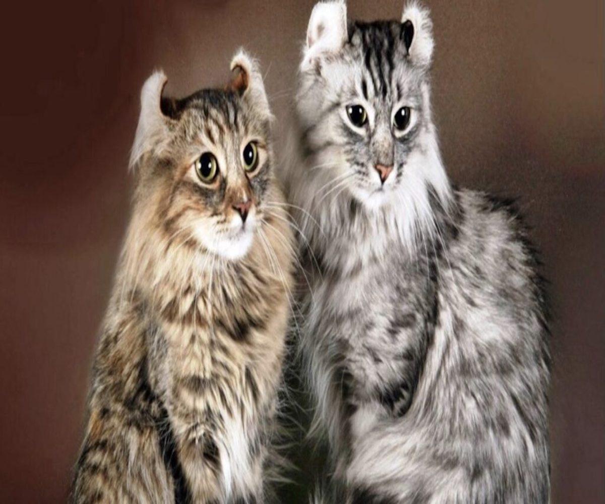 felini orecchie indietro