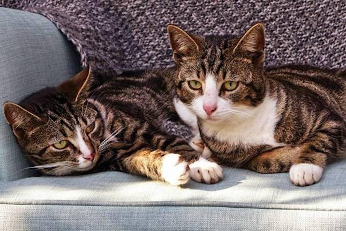 gatti si rilassano insieme