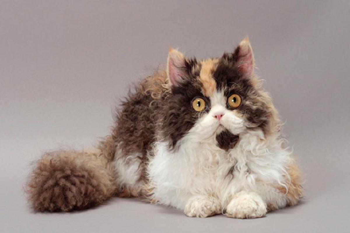 gatto muso strambo