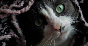 ribolla gatto scompare mirtillo sopravvive maltrattamenti
