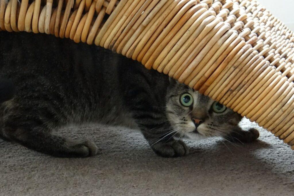 gatto sotto un mobile