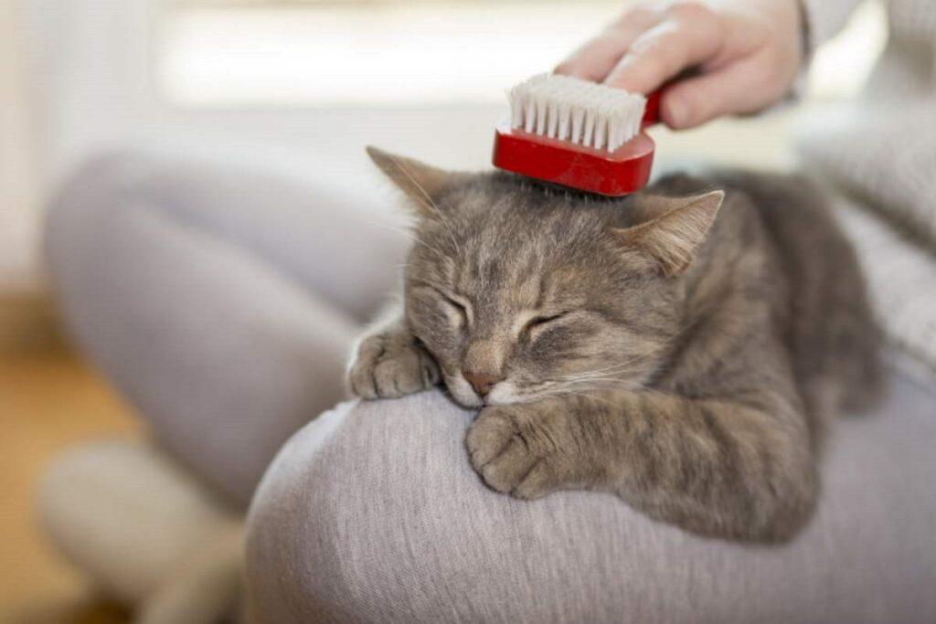massaggio sulla testa al gatto