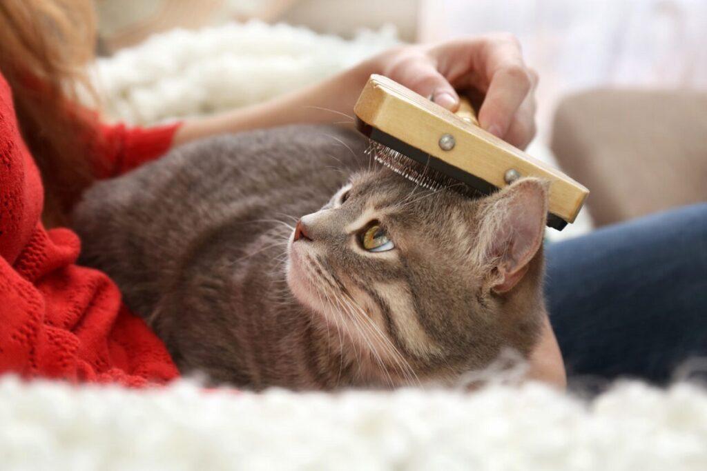 donna spazzola gatto