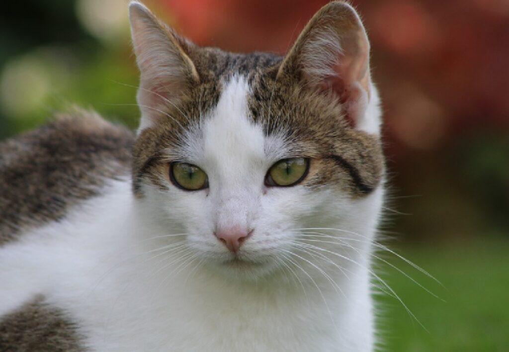 nome gatto randagio casa torino