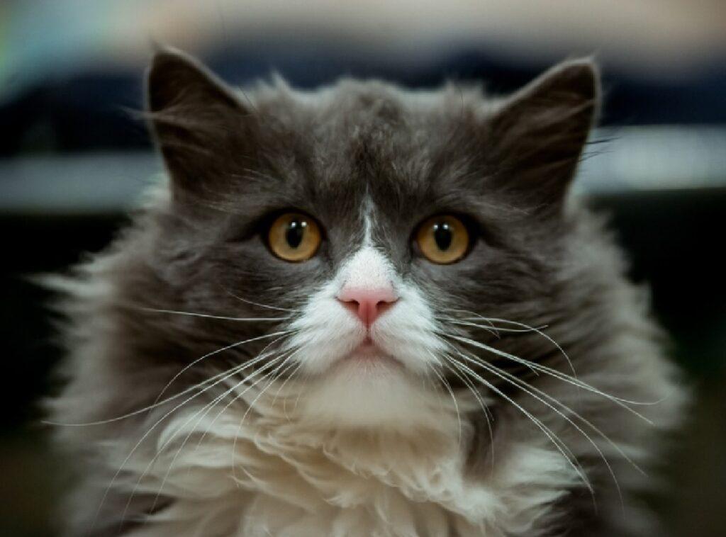 gatto randagio sena nome casa campo calcetto