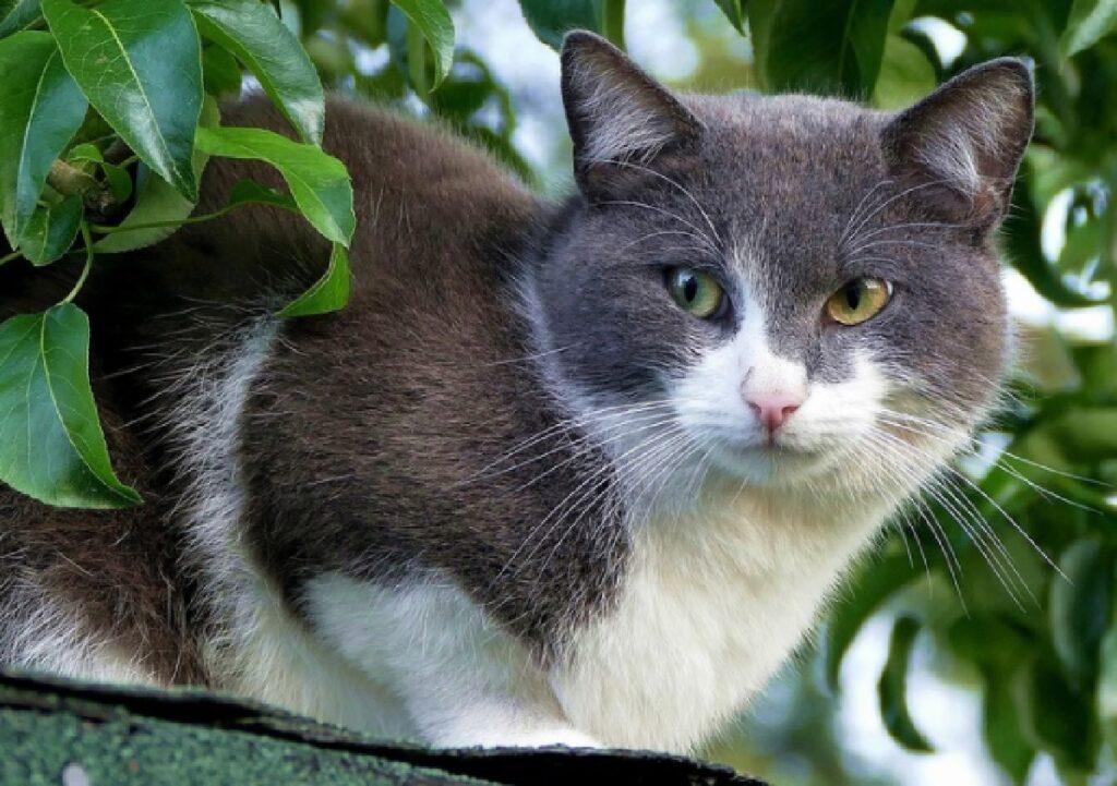 torino gatto randagio quartiere circoscrizione 7