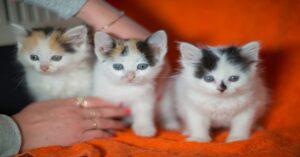 tre gattini cuccioli