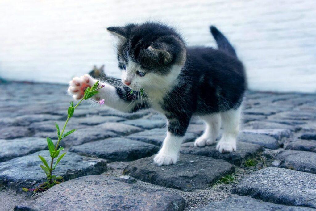 gattino che gioca con un fiore
