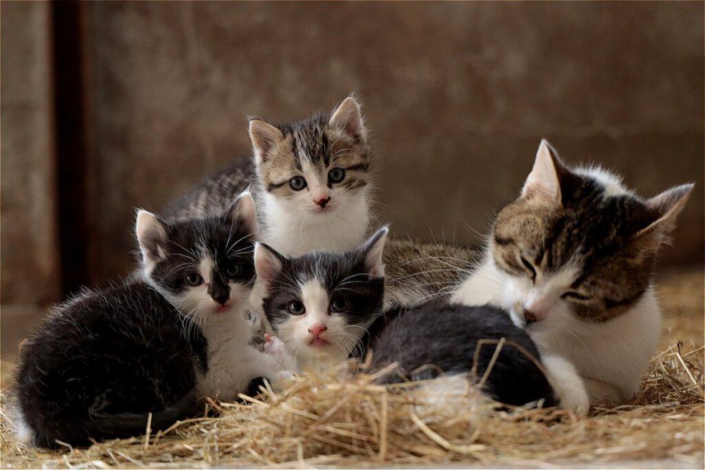gattini con mamma gatta