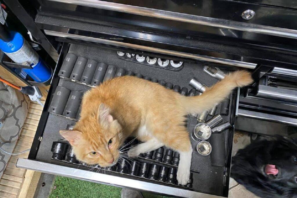 cassetta attrezzi gatto