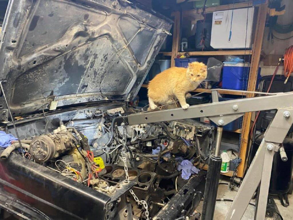gattina jeep visita