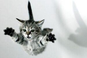 gattino si lancia nel vuoto