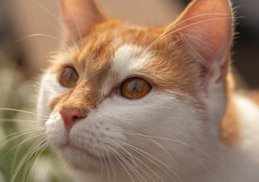 viggiu gatto occhi sguardo