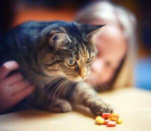 gatto tocca caramelle
