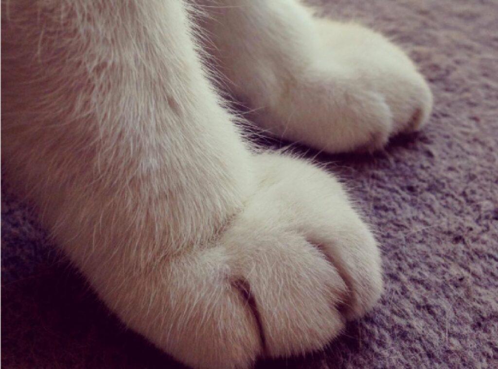 gatto artigli felini rischio