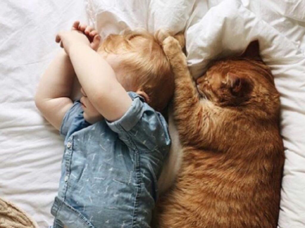 gatto arancione bambino camicia