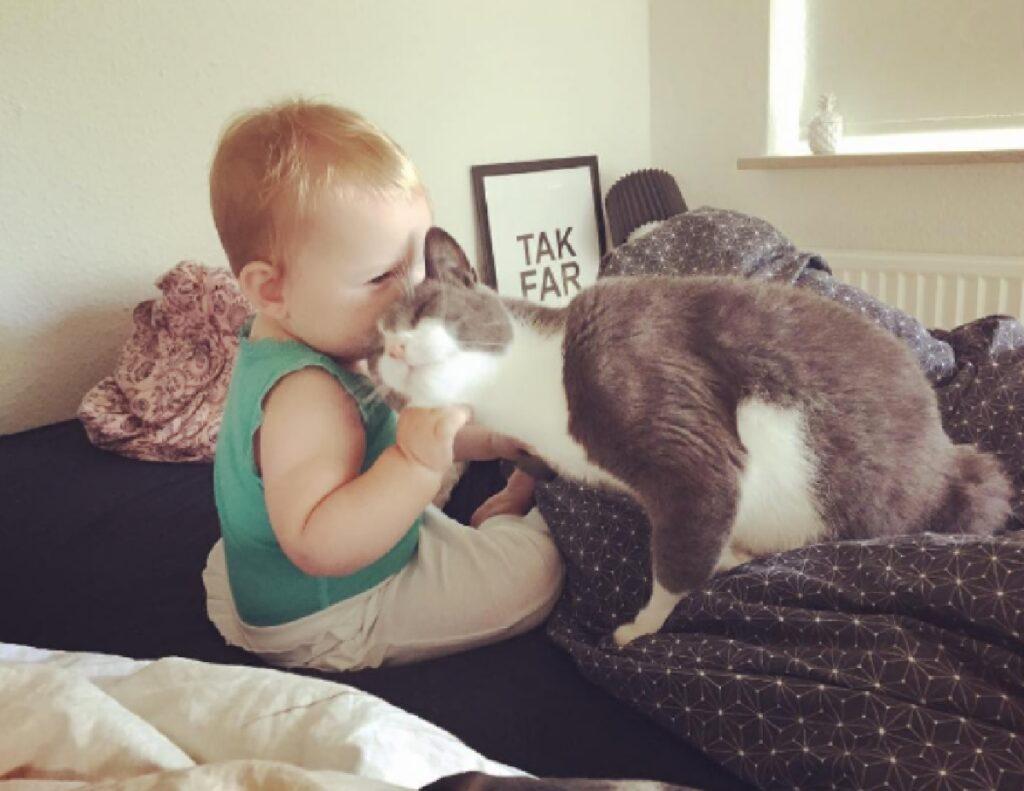 gatto bambino bacio bimbo
