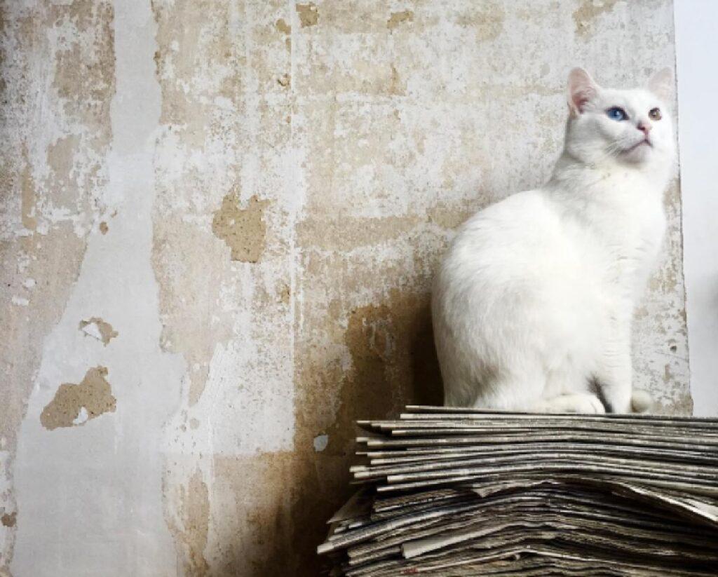 gatto bianco sfondo chiaro