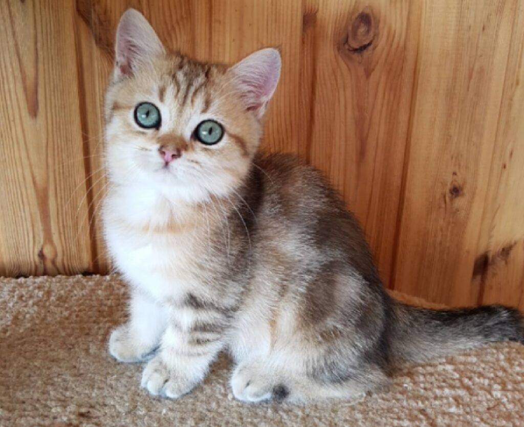 gatto piccolo amore infinito