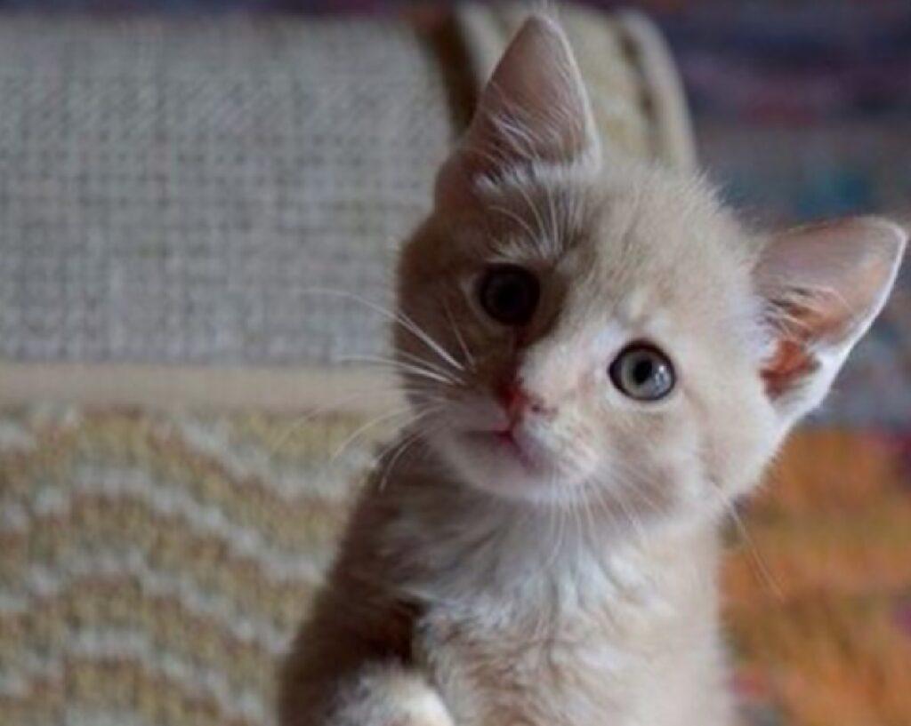 gatto arancione sguardo irrinunciabile