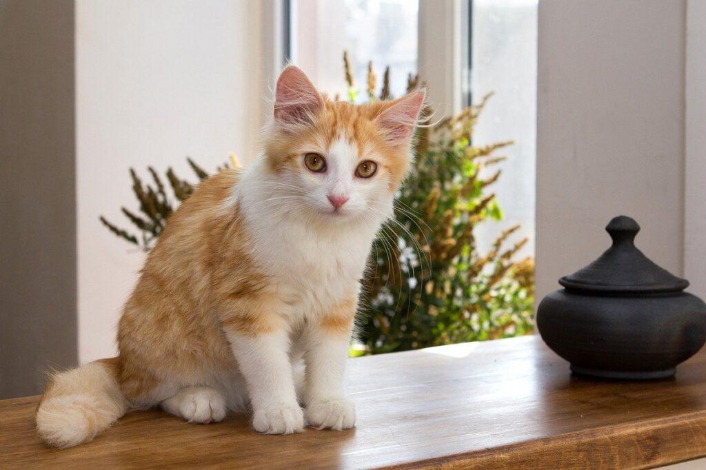 gatto mobile legno