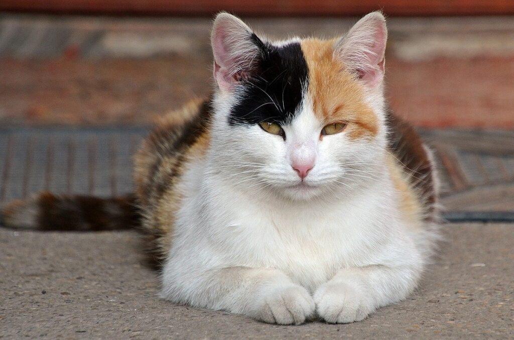 gatto colori diversi
