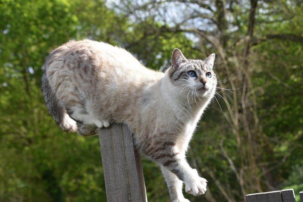 felino staccionata zampe