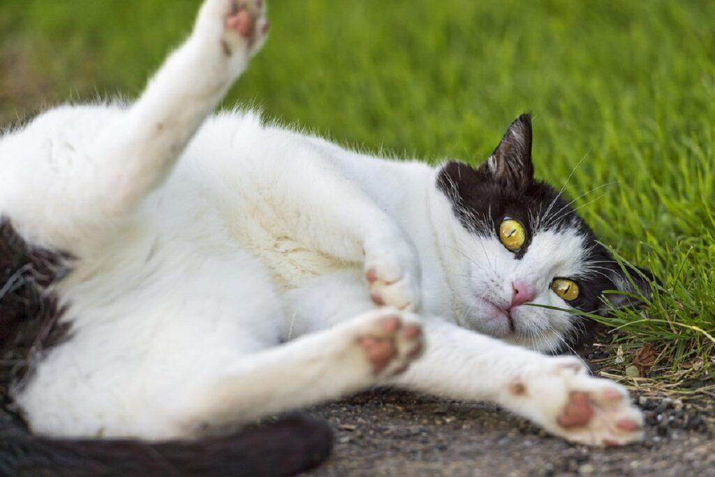 gatto buffo zampe
