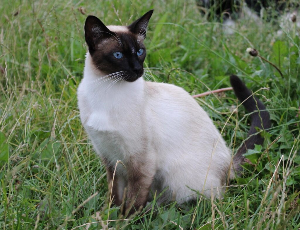 gatto erba giardino
