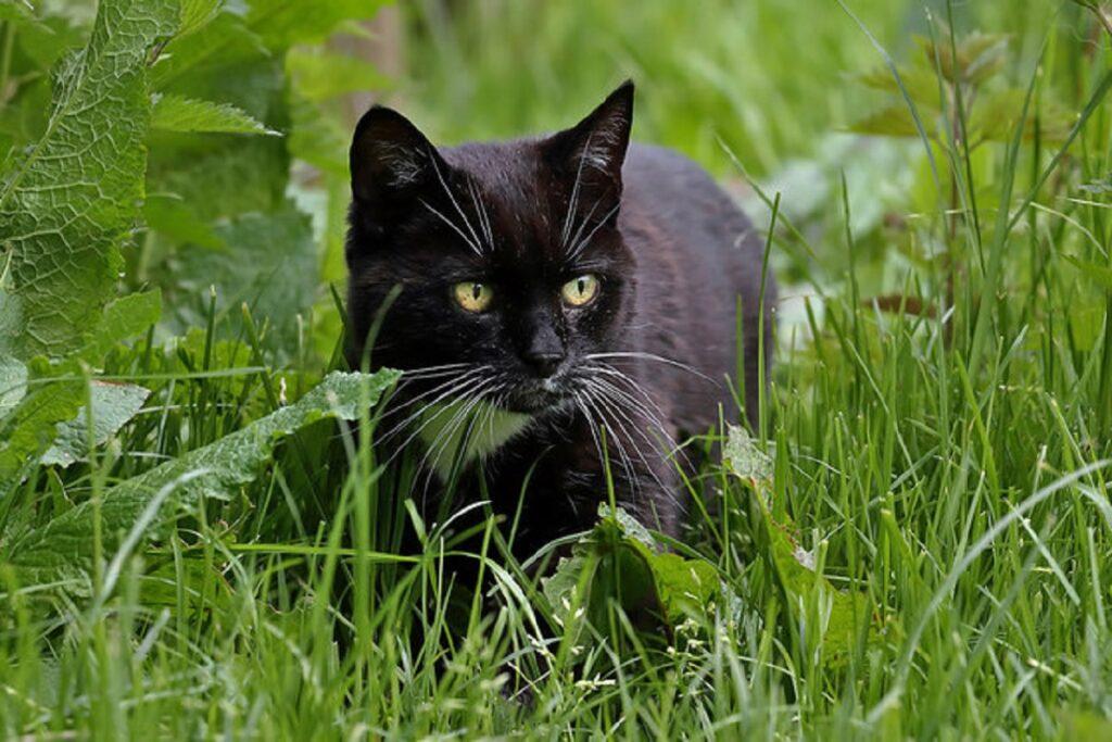 gatto natura aperto