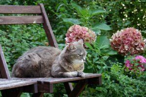 gatto panchina natura