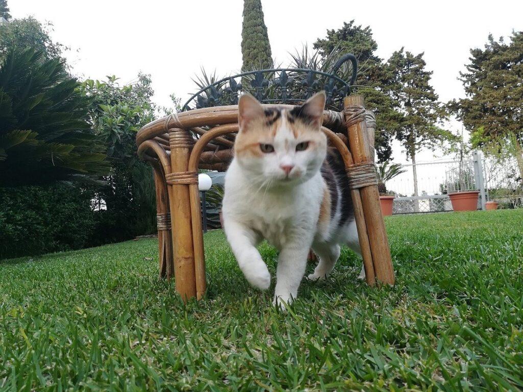 gatto tavolino legno
