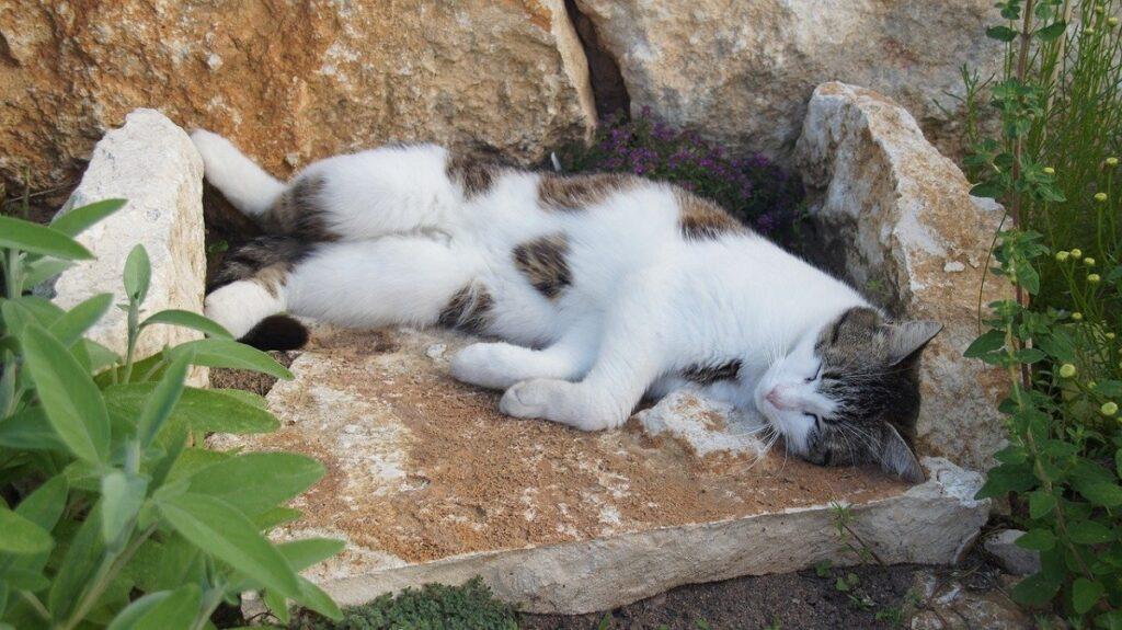 gatto riposino sonno