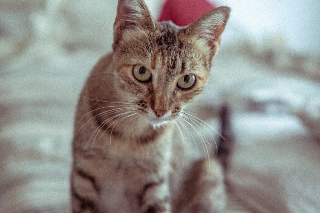gatto soriano stupendo