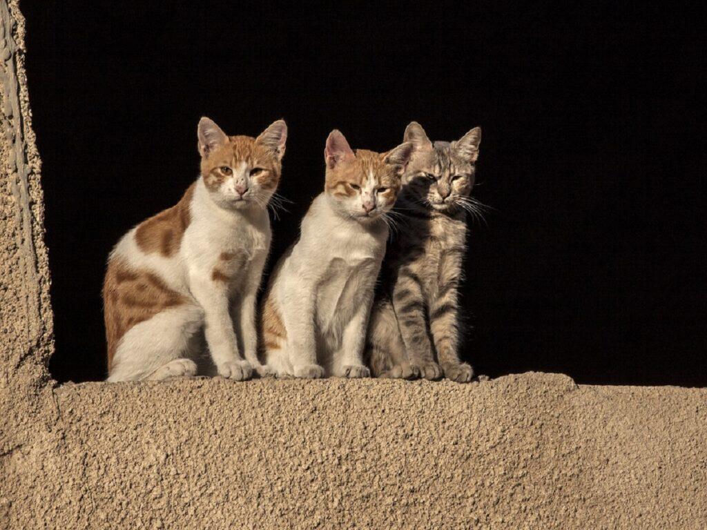 gatti amici splendidi