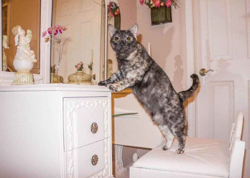 gatto zampe comodino