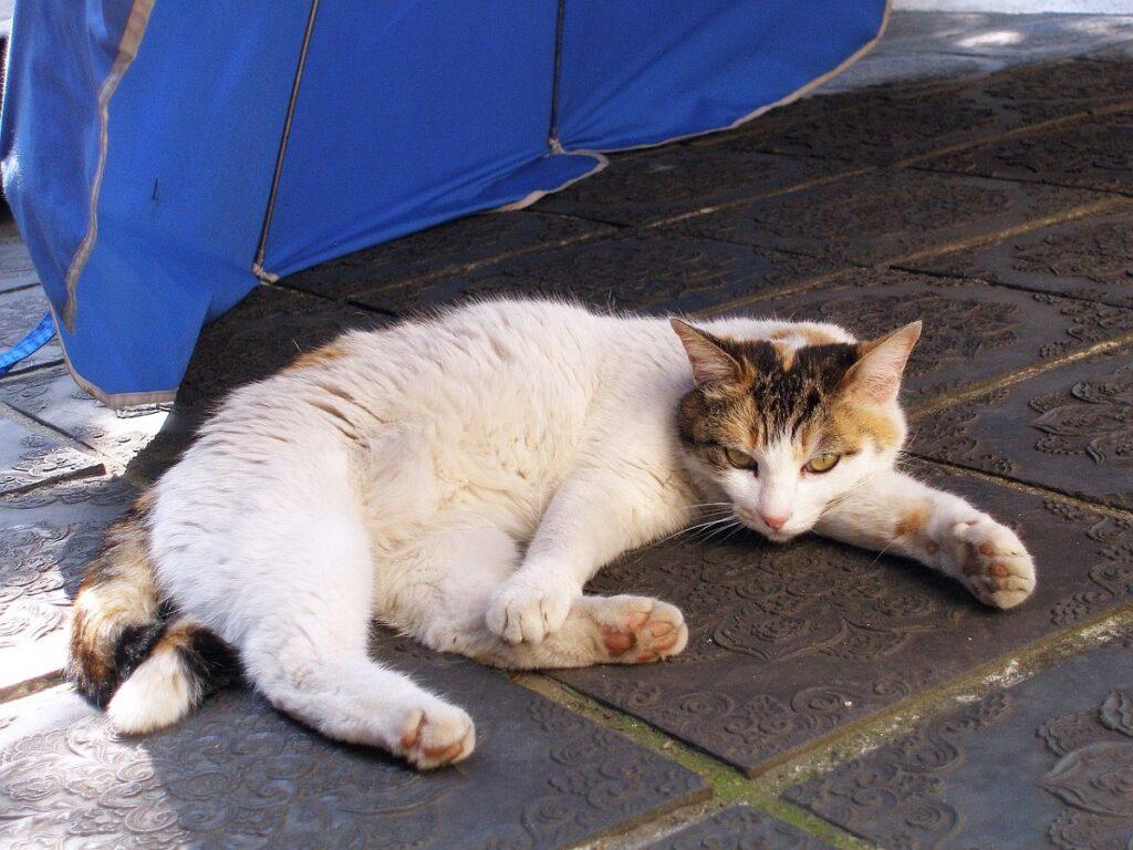gatto relax sdraiato