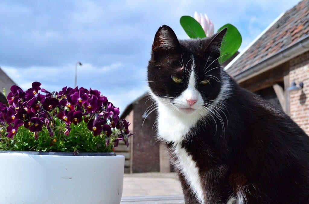 gatto vaso fiori
