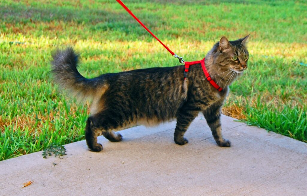 gatto splendido tigrato