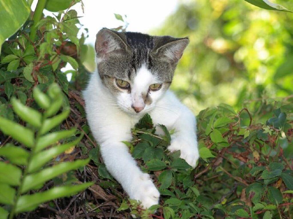gatto foglie natura