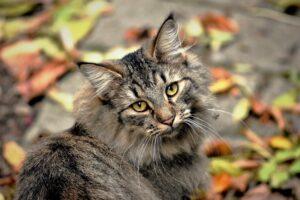 gatto foglie guarda