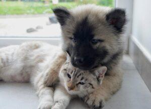 gatto cucciolo amici