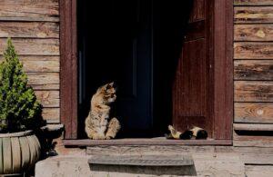 gatto porta ingresso