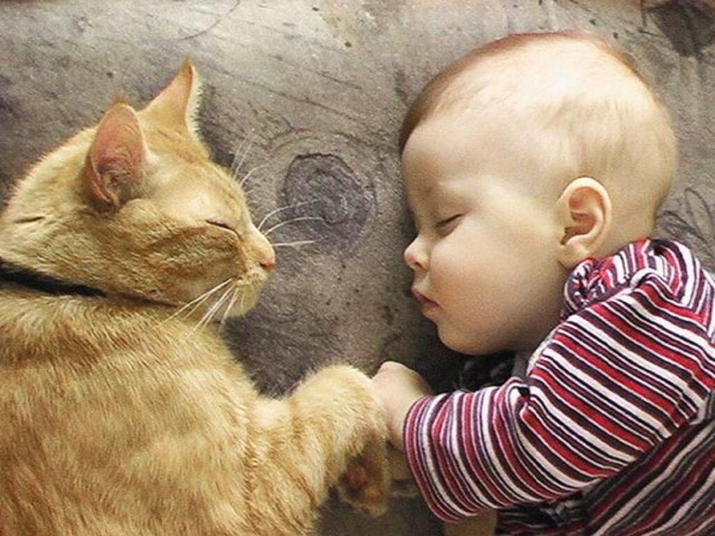 gatto bambino dormono