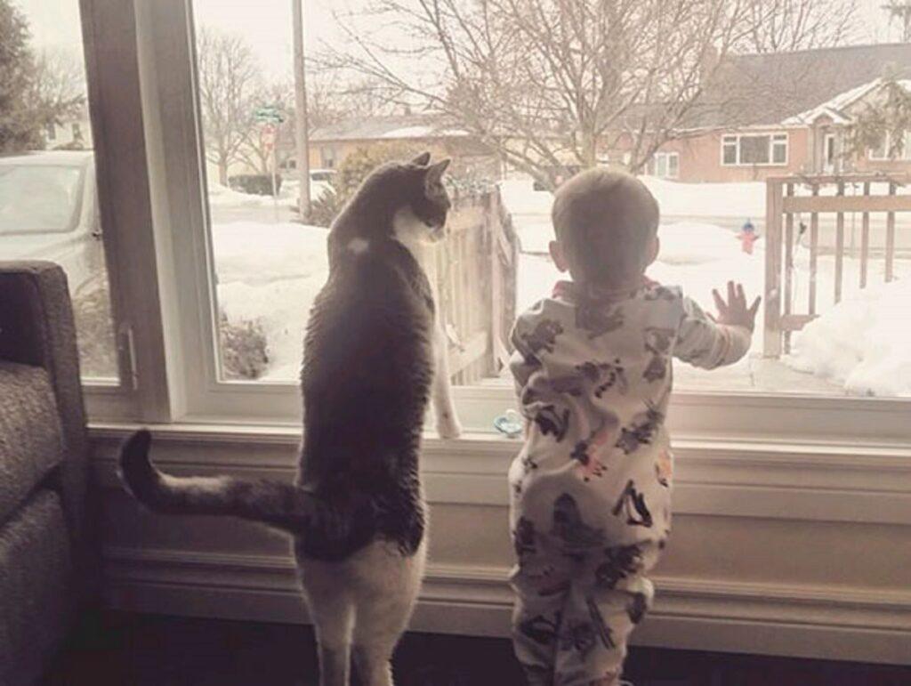 gatto amico finestra