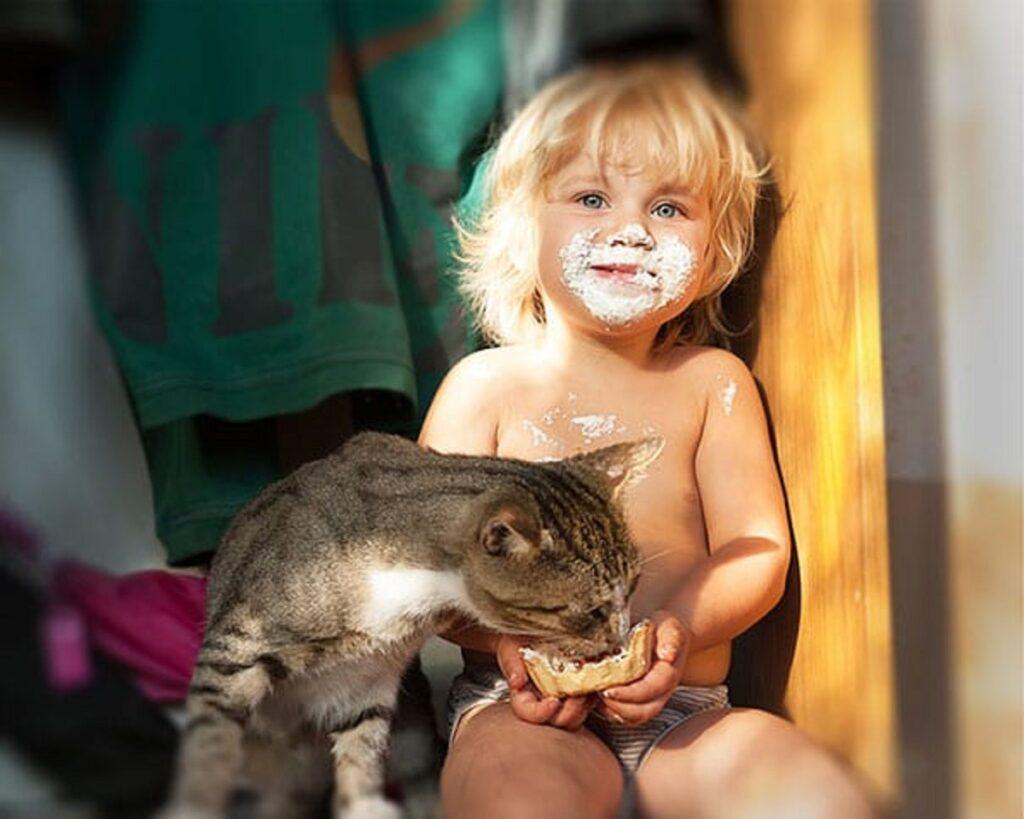 gatto spuntino merenda
