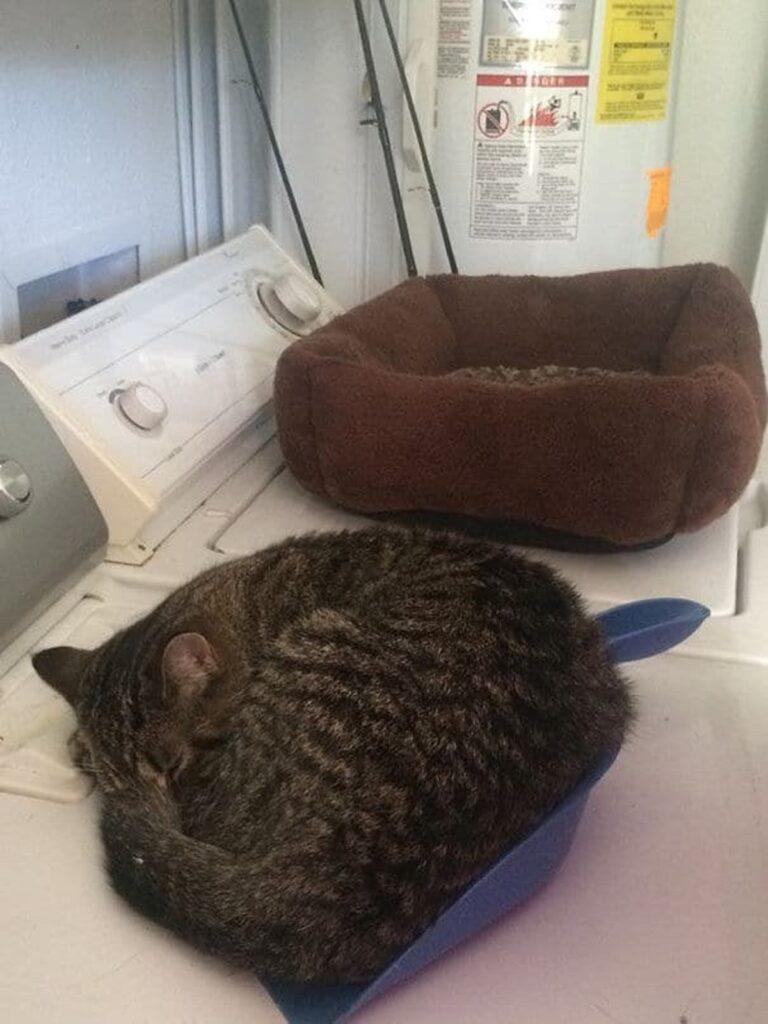 gatto dorme paletta