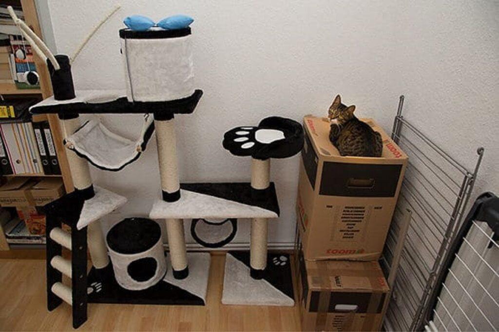 gatto tiragraffi scatola