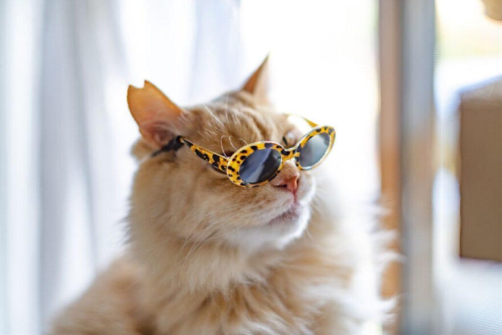 gatto lenti sole