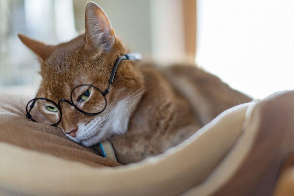 felino coperta appoggiare